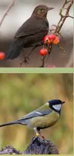 Haagse Vogelbescherming op zoek naar vrijwilligers en leden